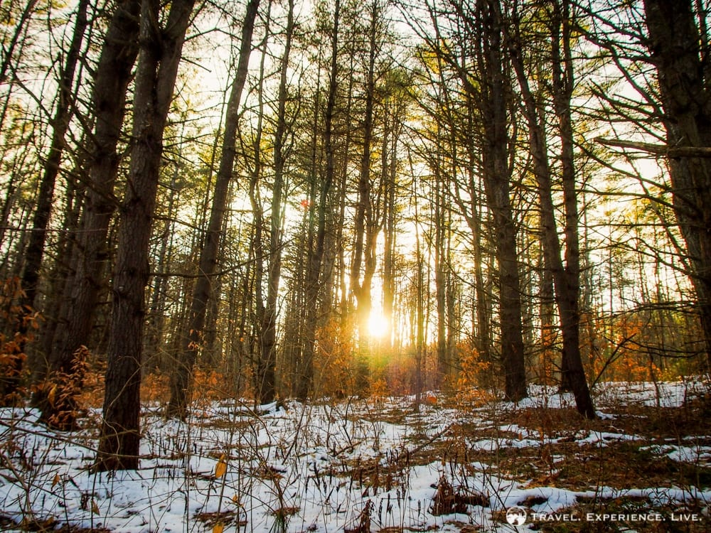 Sunset in the woods, Vermont
