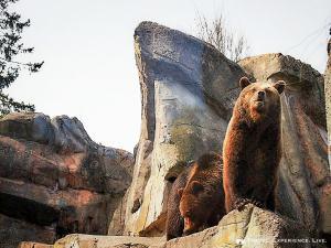 Brown bears in Skansen, Stockholm, Sweden
