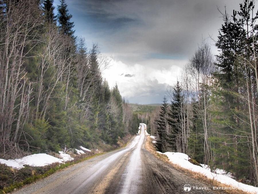 An empty road through the Swedish wilderness