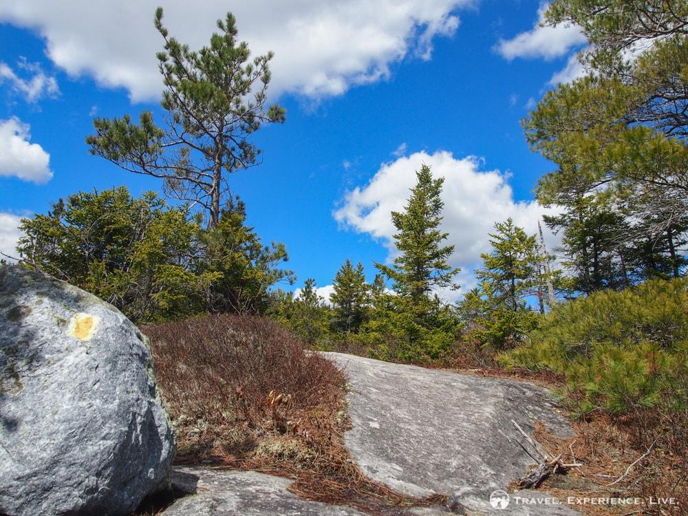 Yellow blazes of the Blueberry Mountain Trail