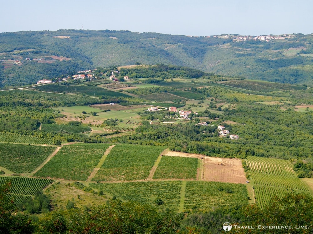 Vineyards in Istria, Croatia