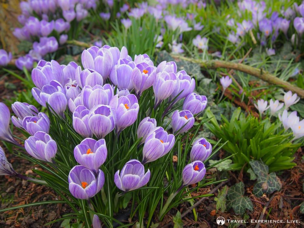 What to see in Leuven, Belgium: Leuven Botanical Garden