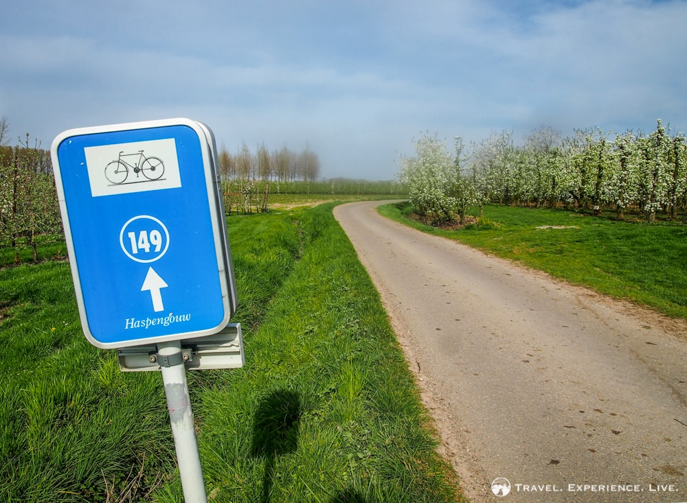 Bicycle route in Haspengouw