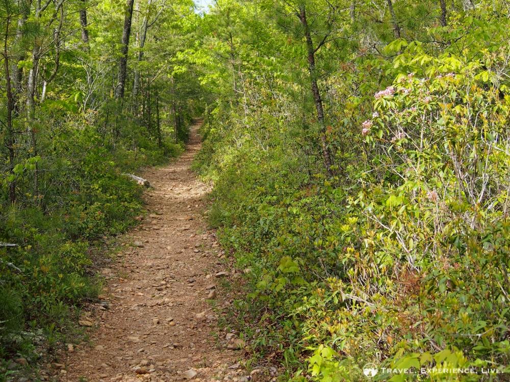 Paine Run Trail, Shenandoah National Park