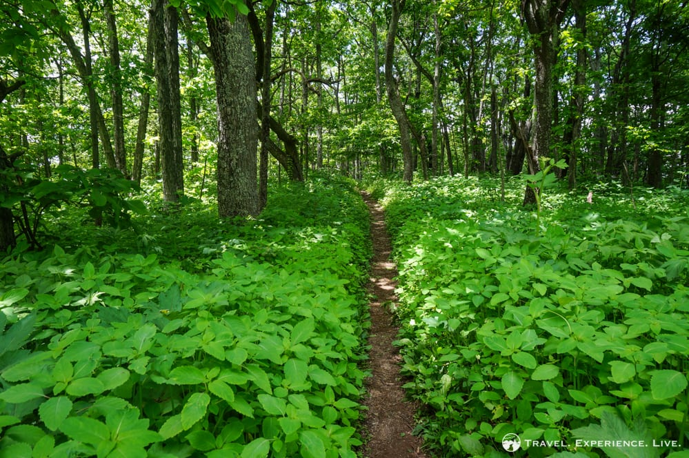 Appalachian Trail, Virginia