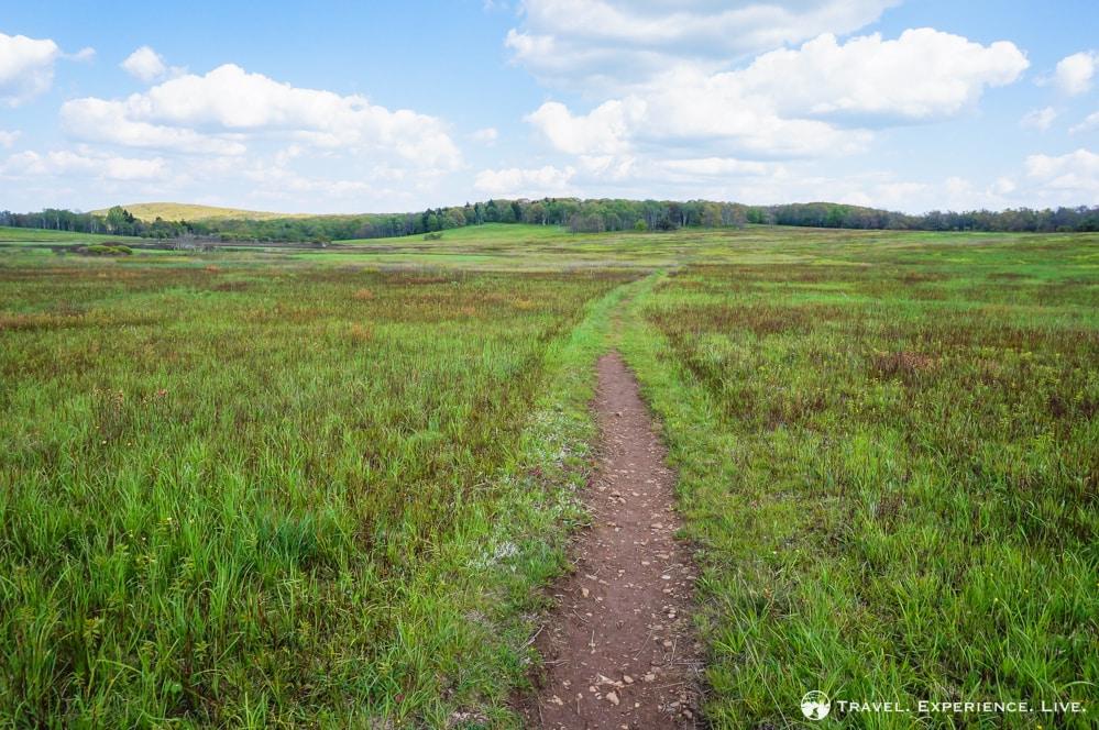 Hiking trail in Big Meadows, Shenandoah National Park