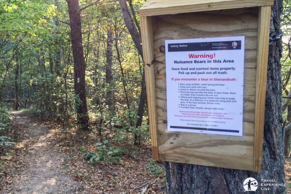 Bear sign, Turk Mountain Trail