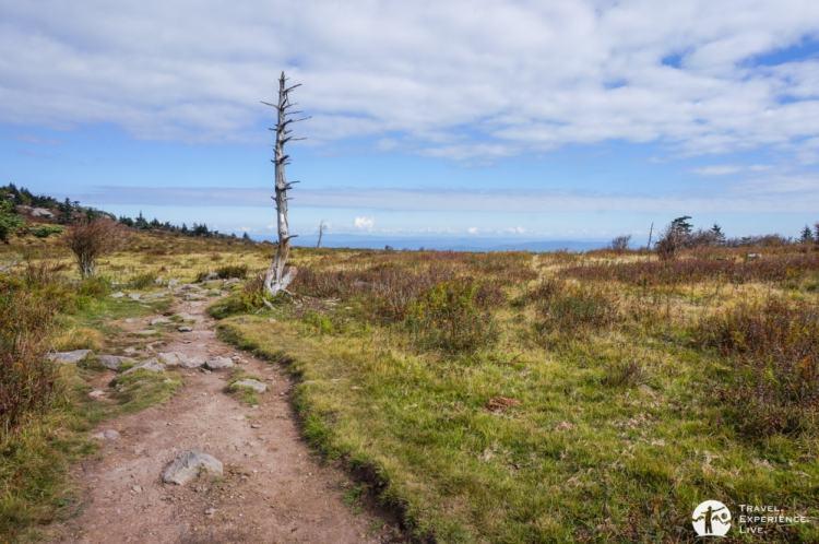Mountain meadows, Mount Rogers National Recreation Area