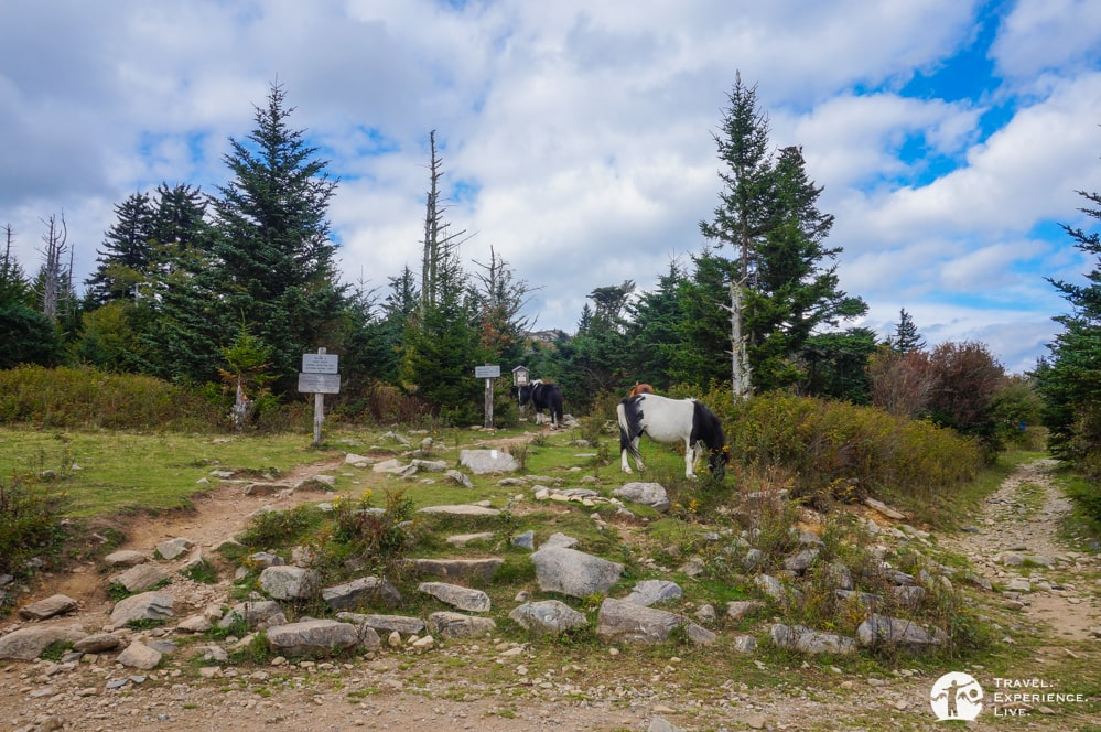 Ponies in Mount Rogers National Recreation Area