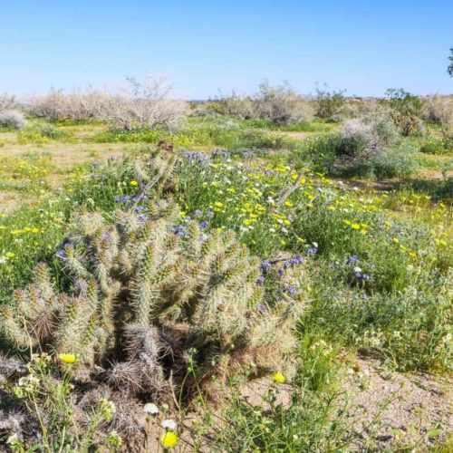 Cactus in the Anza-Borrego Desert, California
