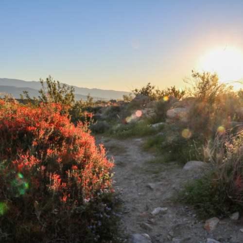Morning in the desert, Anza-Borrego Desert
