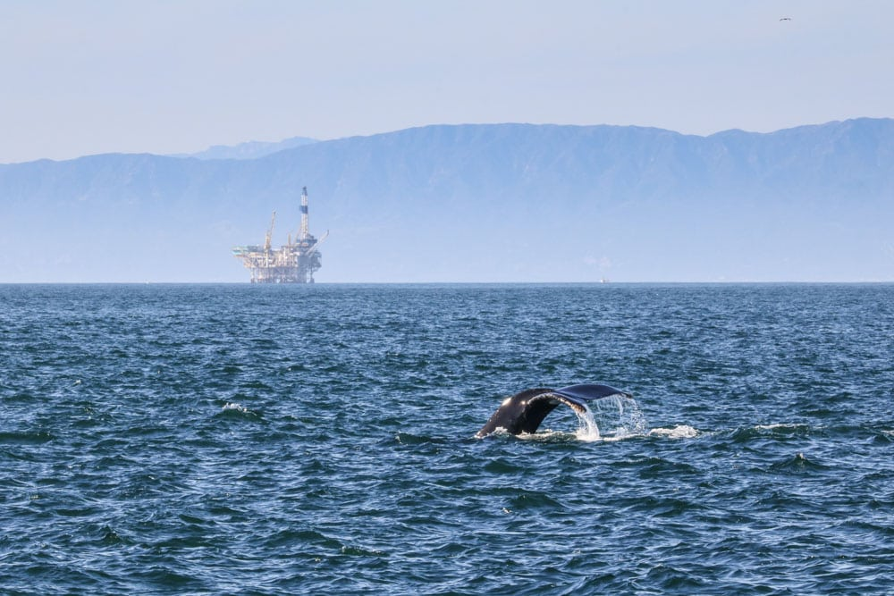 Humpback whale in Channel Islands National Park, California