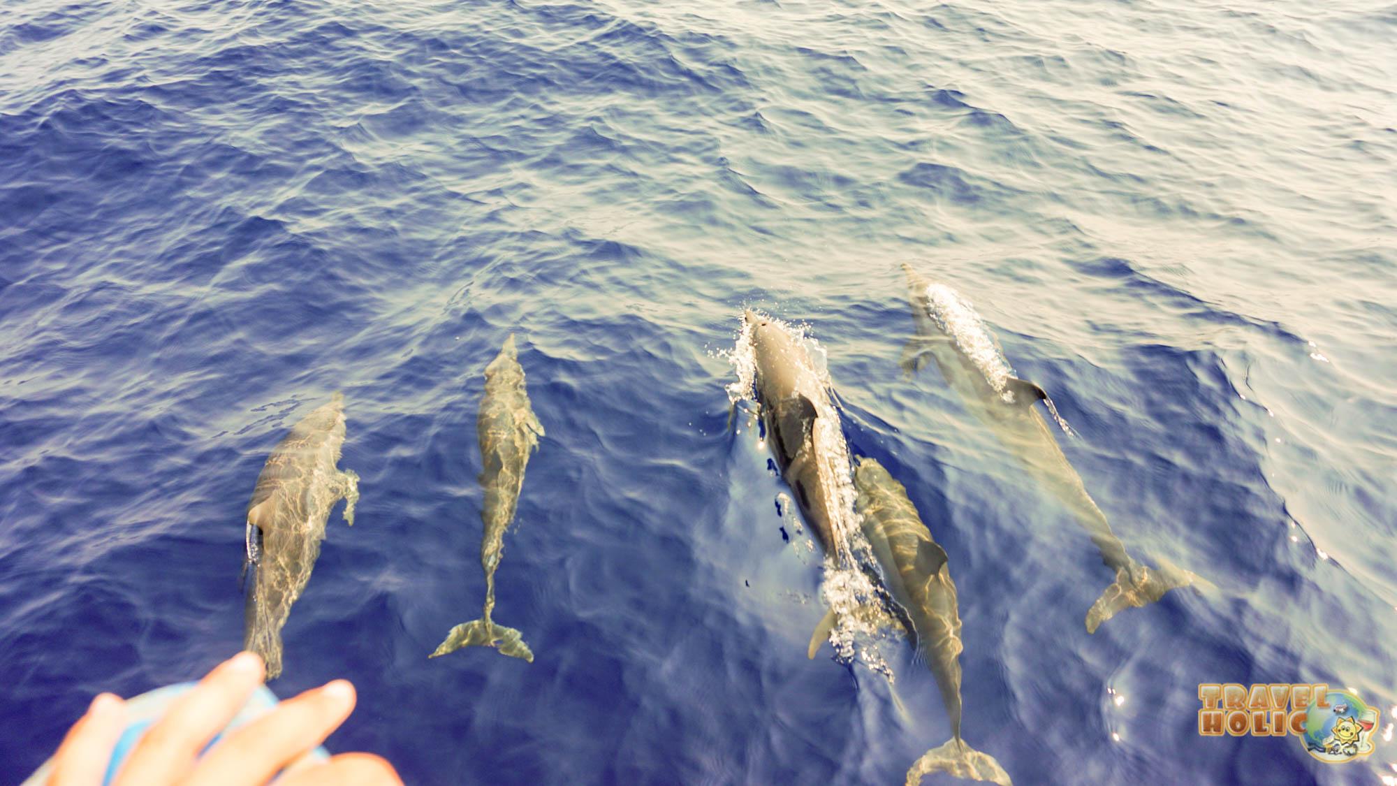 Une magnifique rencontre avec des dauphins à Raja Ampat