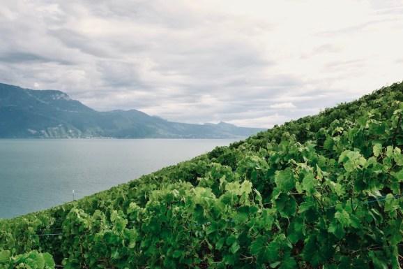 suisse-lac-leman15