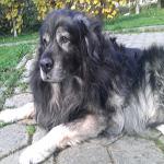 travel-slovenia-karst-shepherd5