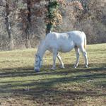 travel-slovenia-lipizzan-horse