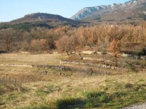 Terraces in Vrtovin