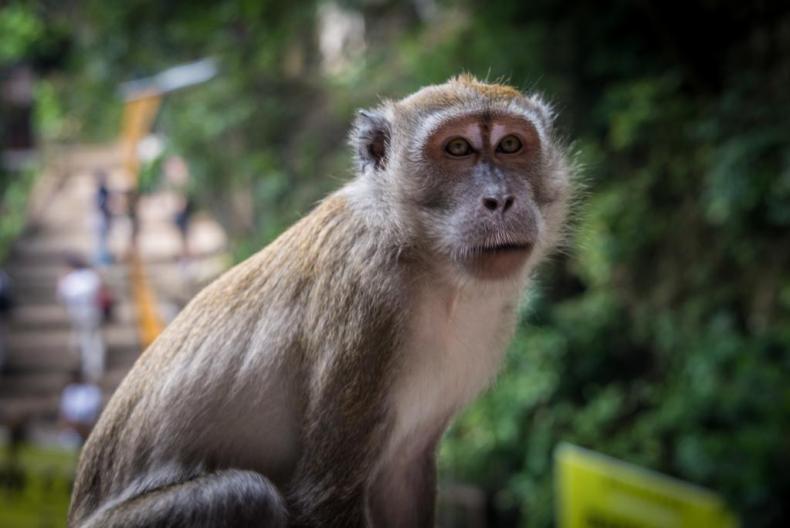 Monkey at Batu Caves - One of my favorite cruise photos