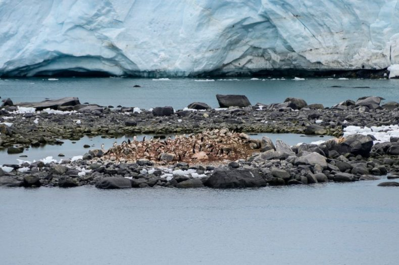 Penguin Colony in the Neumayer Channel - Antarctica