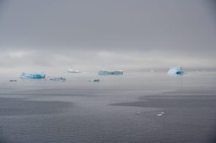 Icebergs in the Gerlache Strait