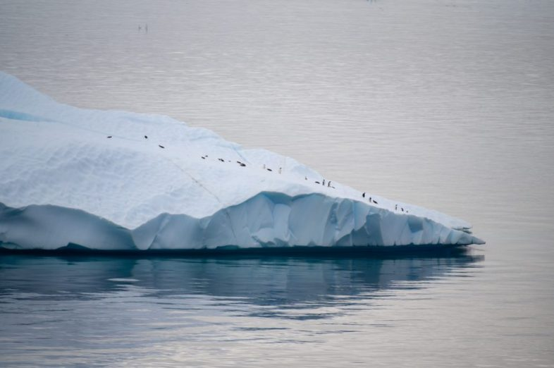 Cruising by penguins on top of an iceberg