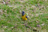 Birds on our Coral Princess Excursion in Ushuaia - Cruise to Antarctica