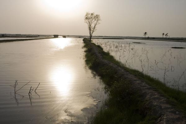Image of Dyke running through a landscape of water, Khulna, Bangladesh