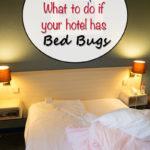 Dicas de viagem: o que fazer se seu hotel tiver percevejos