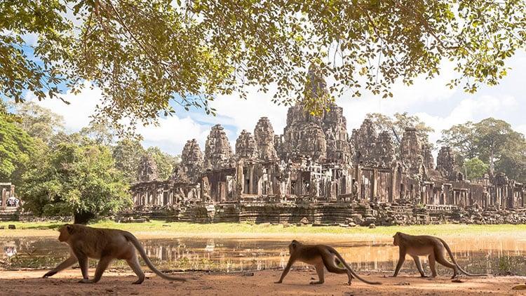Cambodia by @danflyingsolo