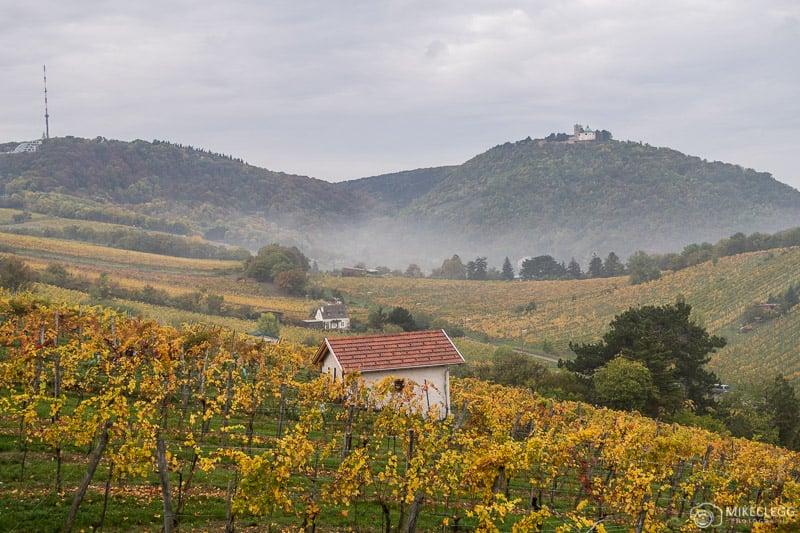 Kahlenberg e plantações vinícolas em Viena