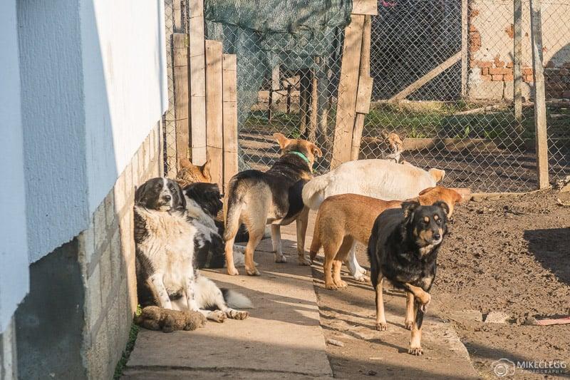 Vagabundos no santuário de cães