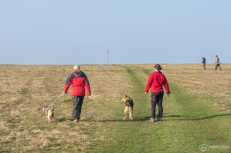 Cães passeando e voluntários