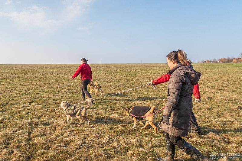 Passeando com os cachorros