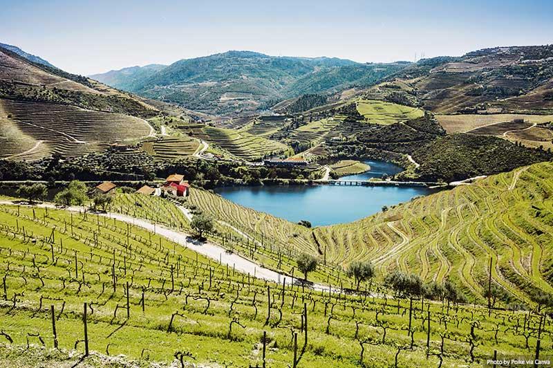 Vinhas no vale do Douro com rio, Portugal