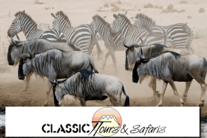 The Classic Tours and Safaris Ltd