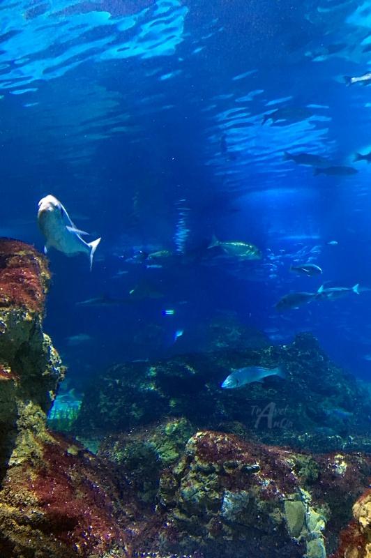 Barcelona co warto zobaczyć - akwarium