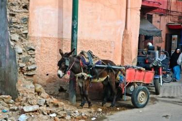 TravelAnQa-Maroko-Marrakesz_5247