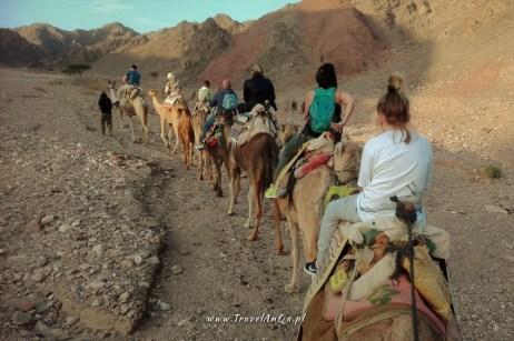 Ejlat Izrael atrakcje turystyczne - Camel Ranch