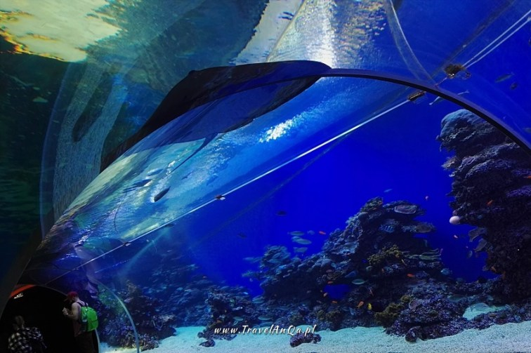 Ejlat Izrael atrakcje turystyczne - Obserwatorium morskie