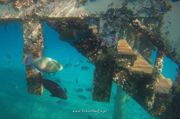 Ejlat Izrael atrakcje turystyczne - nurkowanie