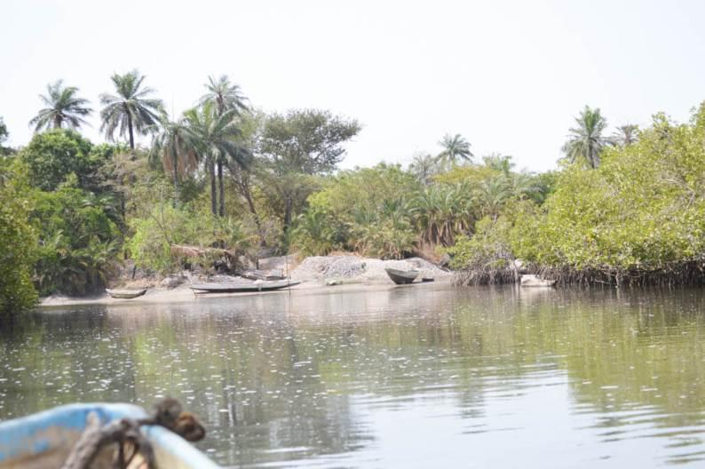 Makasutu Forest - Gambia