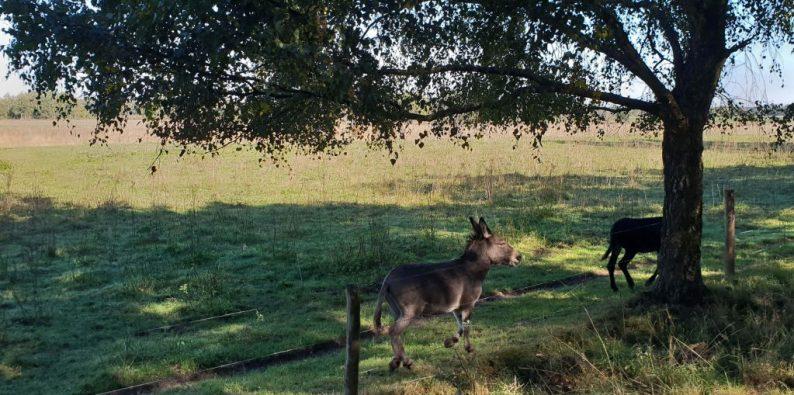 Nationaal Park De Meinweg in Midden Limburg