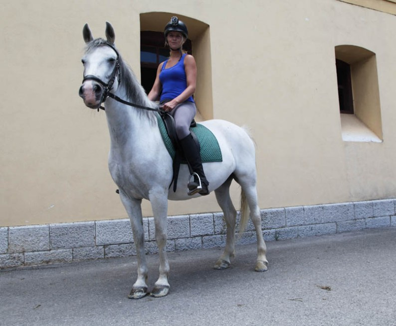 Paardrijden op een Lippizaner