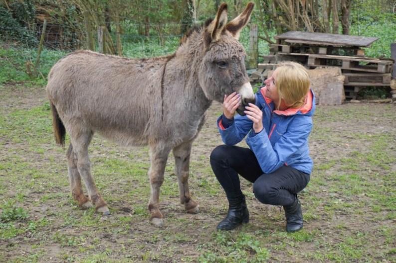 Wandelen-met-ezels-Limburg