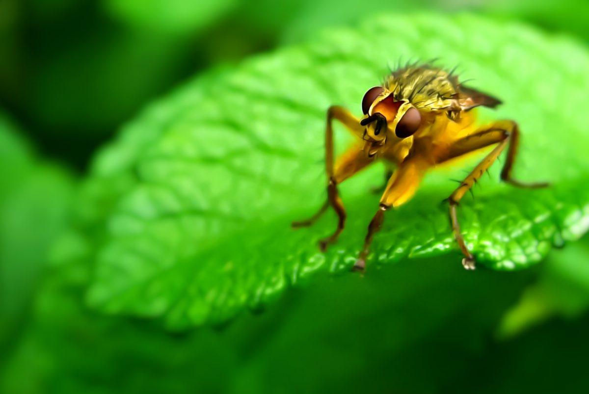 Life is Beautiful - laughing bug art print