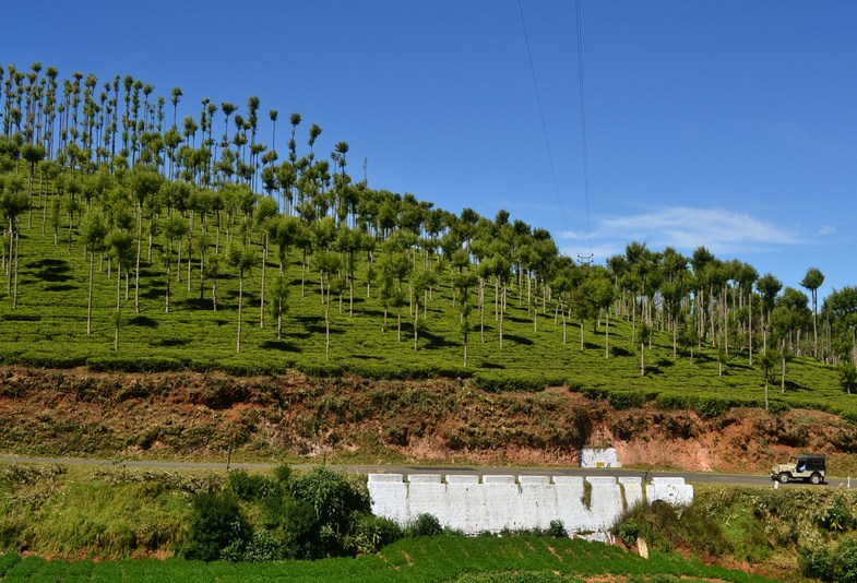 Exploring Avalanche and Emerald in Ooty
