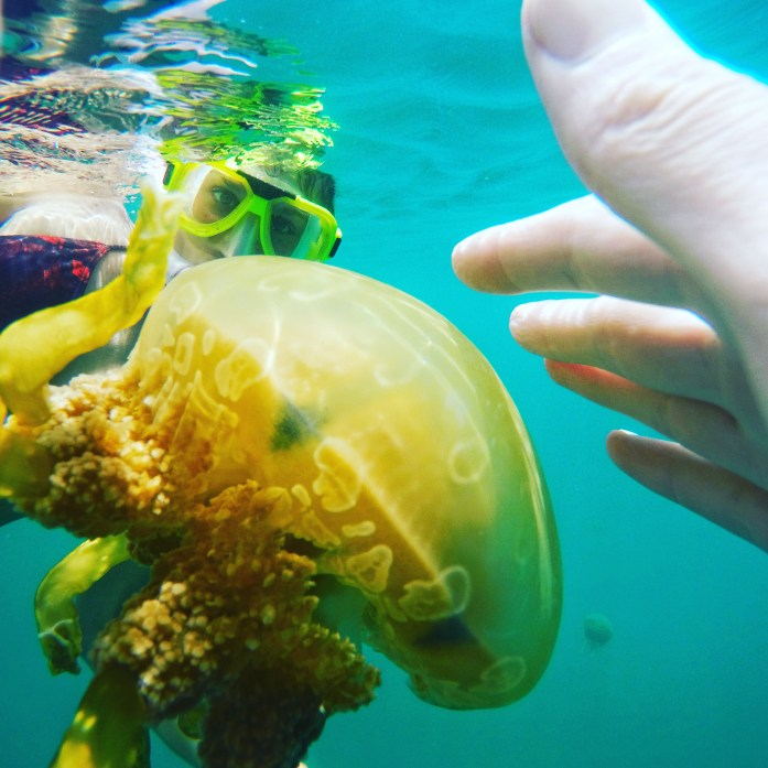Playing with Jellyfish in Palau
