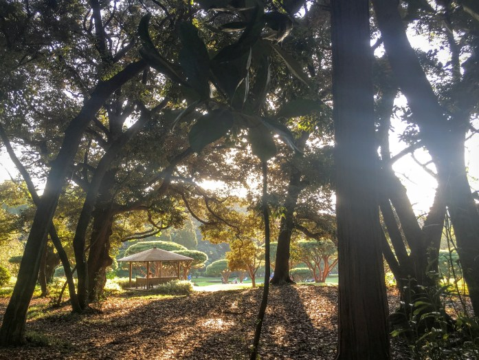 Shinjuku park offers serenity amidst the chaos of the city