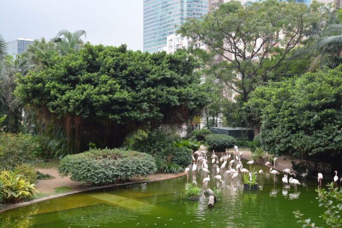 Flamingos, Kowloon Park, Hong Kong