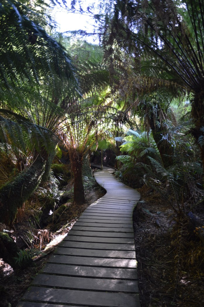 Maits Rest Rainforest Walk, Australia
